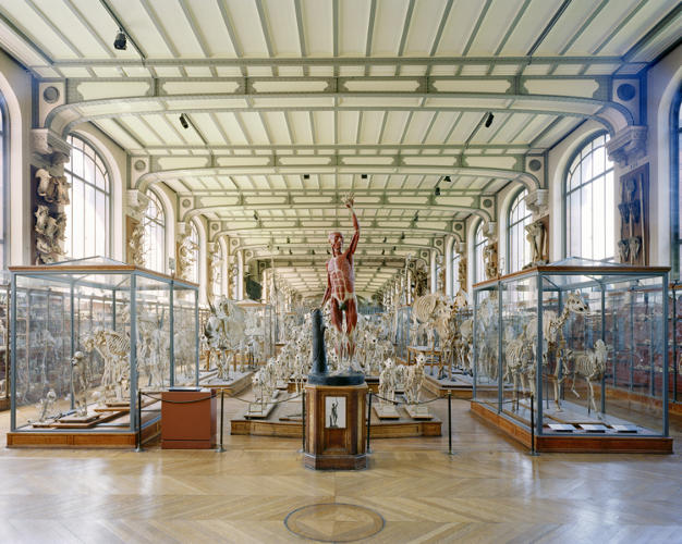 <p>Barnes is interested in the &quot;excavated, compiled, and organized manufacturing of display,&quot; the Julius Shulman Institute says. Over the course of several years, he traveled around the world snapping pictures of natural history museum exhibits.</p>