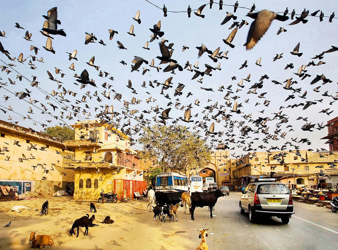 <p>Like some kind of beautiful plague, a tornado of birds encircles the lucky (unlucky) photographer.</p>