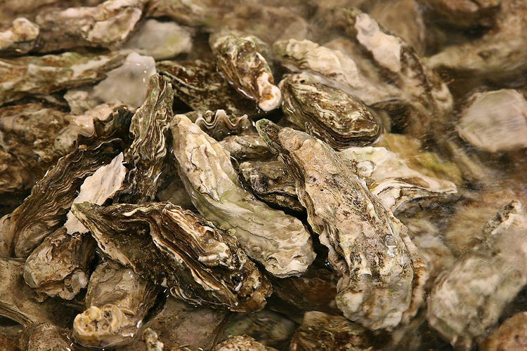 <p>The humble oyster is among the first items in Sam Roberts's <em><a href=&quot;http://www.nytimes.com/interactive/2012/09/02/nyregion/a-history-of-new-york-in-50-objects.html?smid=tw-share#/?gridItem=all&quot; target=&quot;_blank&quot;>&quot;History of New York in 50 Objects</a></em>.&quot; Popularized by the Dutch in the 1600s, the city's oyster beds were closed in 1927 (due to pollution, of course).</p>