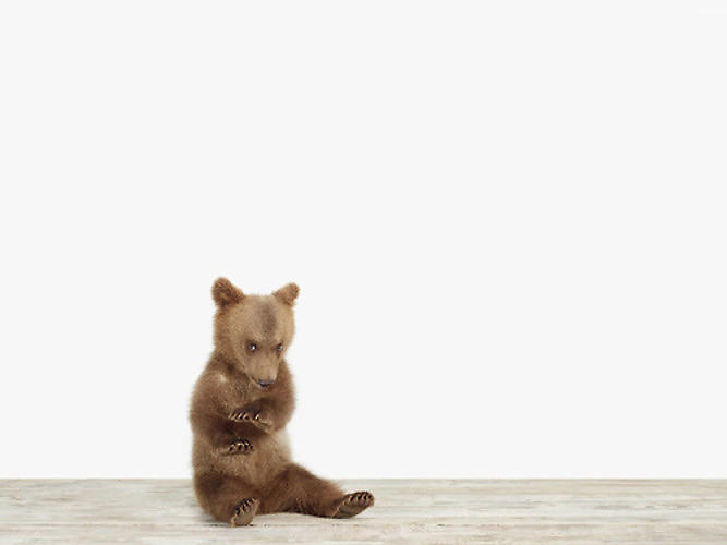 <p>The L.A.-based photographer Sharon Montrose specializes in snapping animals removed from their habitats and placed in front of stark white backgrounds. The <a href=&quot;http://www.fastcodesign.com/1670577/warning-dangerously-cute-animal-portraits-ahead#1&quot; target=&quot;_self&quot;>resulting portraits</a> capture creatures as they perform for the camera with a human-like awareness of the lens.</p>