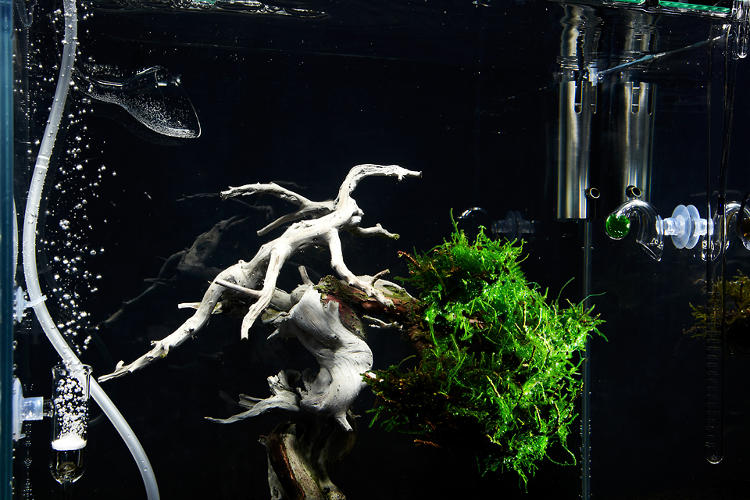 <p>The result is a bonsai-like creation that floats underwater in constant movement with the current.</p>