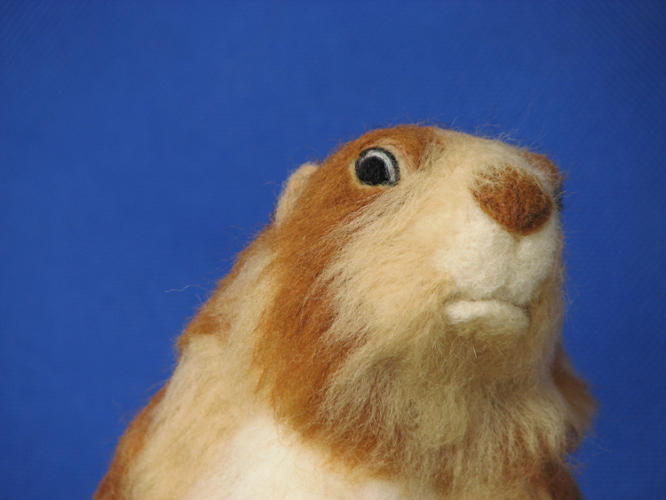 <p><a href=&quot;http://www.youtube.com/watch?v=oTKybiHJBKA&quot; target=&quot;_blank&quot;>Dramatic prairie dog</a>!!</p>