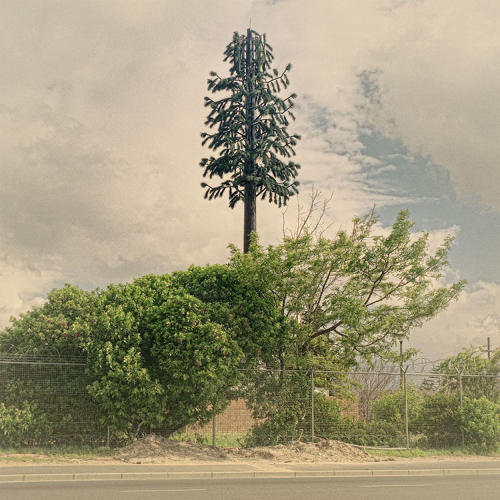 <p><em>Invasive Species</em>, a series by photographer Dillon Marsh, documents cell phone towers in tree disguises.</p>