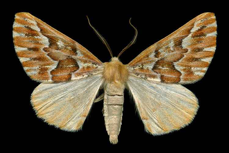<p>Jim des Rivières doesn't agree. The software programmer-turned-photographer has for the better part of a decade pursued the beauty of moths.</p>