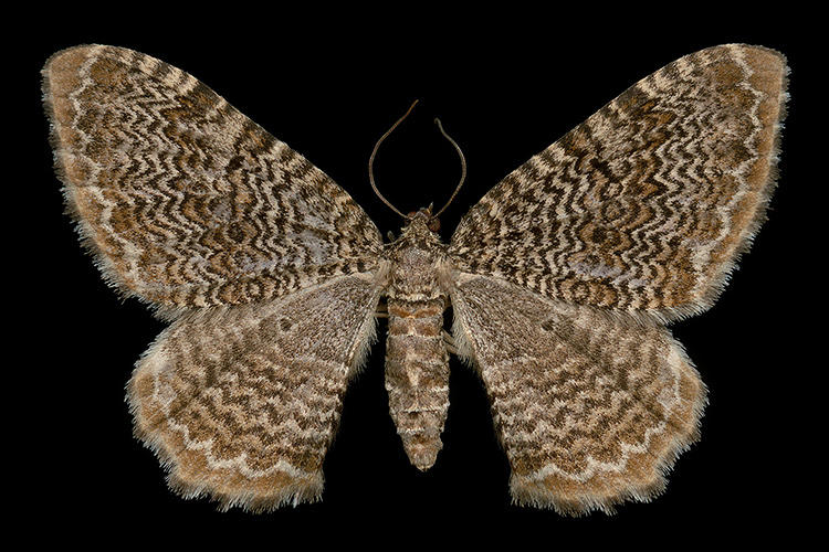 <p>There he would set up his portable moth-catching kit, which included a tall black light, a large white sheet, and a stool.</p>
