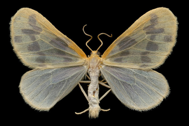 <p>Des Rivières' interest in moths grew out of documenting the region's butterflies.</p>