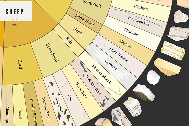 <p>The great variety of cheeses is indicated by the wheel's many orange, yellow, and beige hues.</p>