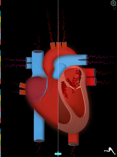 <p>The Human Body has a lot of heart.</p>