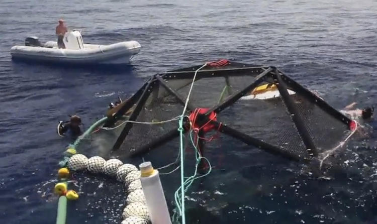 <p>One of the concerns with fish farms is that seafood is being raised out of its natural environment. The <a href=&quot;http://www.kampachifarm.com/offshore.html&quot; target=&quot;_blank&quot;>Aquapod</a>, developed as part of Kampachi Farm's Velella Project, allows baby fish to <a href=&quot;http://www.fastcoexist.com/1680343/a-gentler-fish-farm-powered-by-a-geodesic-dome&quot; target=&quot;_self&quot;>mature in the cozy confines of a 22-foot diameter soccer ball-shaped bubble</a> surrounded by brass mesh that keeps barnacles from, well, barnacling onto the pod. A pilot project (watch video <a href=&quot;http://www.fastcoexist.com/1680239/the-aquapod-a-free-floating-fish-farm&quot; target=&quot;_self&quot;>here</a>) off the coast of Hawaii's big island involves 2,000 Kampachi fish that are eating soybean-enriched diets that are more sustainable.</p>
