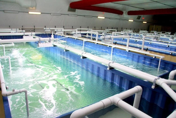 <p>The world's most popular seafood item is white shrimp, and a company called <a href=&quot;http://www.blueoasispureshrimp.com/&quot; target=&quot;_blank&quot;>Blue Oasis Pure Shrimp</a> is proving that it can grow the critters anywhere--even in the desert outside of Las Vegas. The company has developed a closed-loop indoor farm full of artificial ponds kept at 80 degrees Fahrenheit to grow half a million pounds of shrimp per year. The company says its process, which takes 120 days to grow restaurant quality shrimp and recycles 100% of its water, is <a href=&quot;http://www.fastcoexist.com/1678733/growing-local-shrimp-in-vegas-with-the-ocean-hundreds-of-miles-away&quot; target=&quot;_self&quot;>a more sustainable alternative to wild-caught shrimp</a> and traditional shrimp farms, which when constructed can endanger local ecosystems.</p>