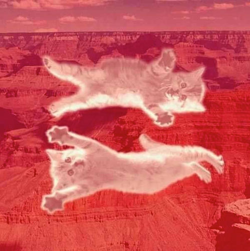 <p>More cats for marriage equality.</p>