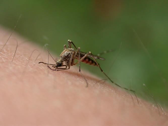 <p>A sticker you attach to your shirt, it contains chemicals that stop mosquitos from sensing CO2.</p>