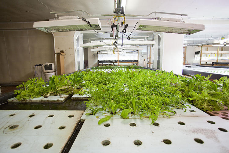 <p>The symbiotic relationship between fish and plants in aquaponics is a microcosm of the broader and more complex closed-loop system that Edel envisions for The Plant, where waste from one activity will fuel another process.</p>