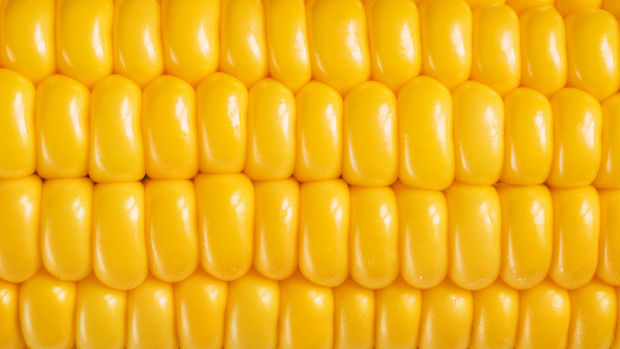 Russia Halts Imports of Monsanto Corn Over Cancer Fears | Humans ...