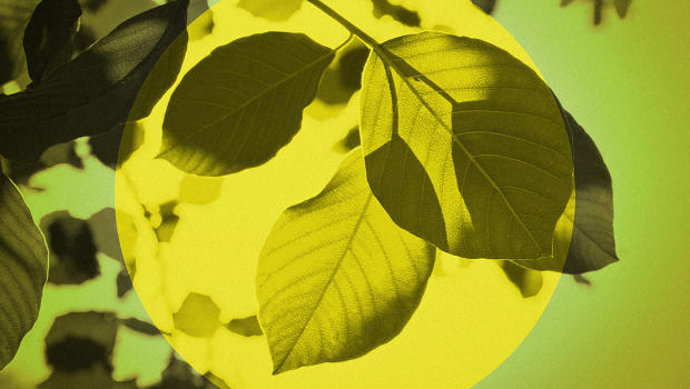 A New Artificial Leaf Turns Sunlight And CO2 Into Fuel More Efficiently
