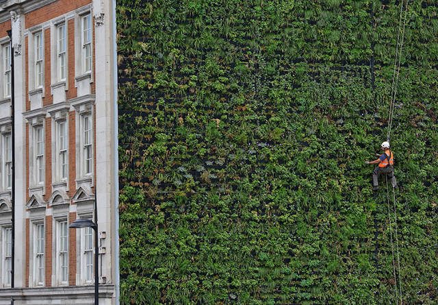 This Giant Wall Made From Plants Isn T Just Pretty It Can