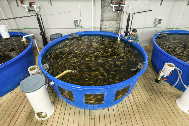 This old factory now full of fish and kale is for Catfish aquaponics