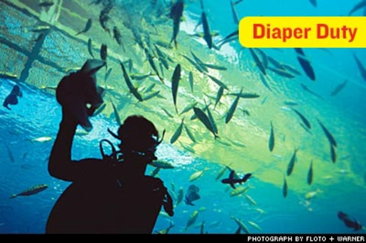 <p>Fifty certified divers on staff take turns swimming with the sharks each week. Here one does the daily work of cleaning the wet-side surface of the glass--using cloth diapers.</p>