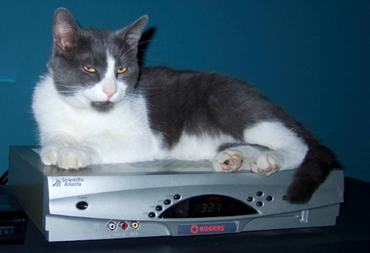 <p>We kind of agree with this cat. Though they're an advance of sorts, the average set-top box is much better for keeping you warm than delivering a 21st century TV experience. [Image: Flickr user <a href=&quot;http://www.flickr.com/andrewcurrie&quot; target=&quot;_blank&quot;> andrewcurrie</a>]</p>