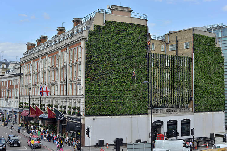 <p>The 3,770-square-foot vertical garden, which is just a few blocks south of Buckingham Palace, introduces to the surrounding cityscape, what the project's chief designer describes as a &quot;sustainable drainage system.&quot;</p>