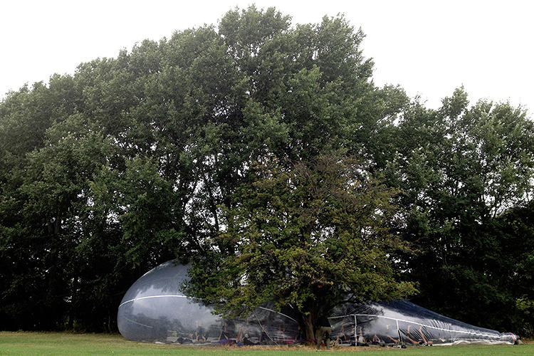 <p>Other times, they wend their way through the city's topography. Here, a bubble wraps around a coniferous tree.</p>