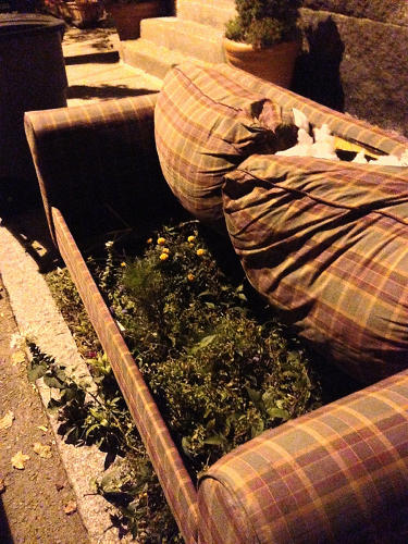 <p>A street couch grows a garden in Cambridge, Mass.</p>