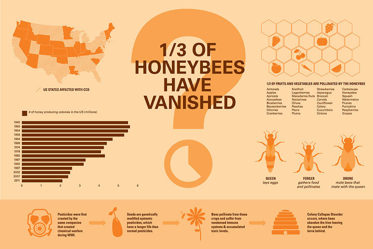 <p>Colony collapse disorder has killed millions of bees. Whatever its cause, the world needs to rebuild the bee population, and that means more hives and more beekeepers.</p>
