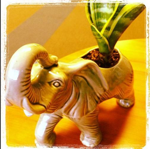 <p>Need someone (or something) to talk to?  &quot;My elephant planter is great for bouncing ideas off of.&quot; @aamzthestudios</p>