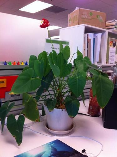 <p>#mydeskplant &quot;helps me think up new green biz ideas!&quot; @Lori Duvall</p>