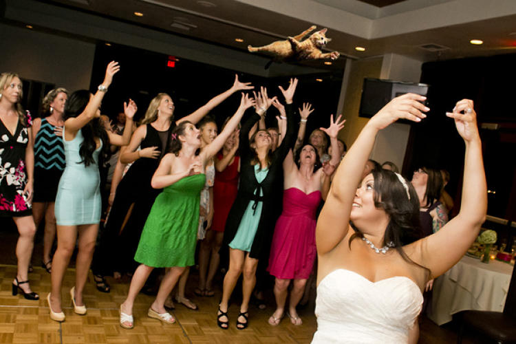 <p>A relative newcomer in 2013, <a href=&quot;http://bridesthrowingcats.tumblr.com/&quot; target=&quot;_blank&quot;>Brides Throwing Cats</a> nevertheless captured our attention by Photoshopping cats into wedding photos of bouquet tosses.</p>