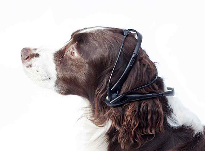 <p>The gadget, a headset that translates dogs' thoughts into speech, is created by the Nordic Society for Invention and Discovery:</p>