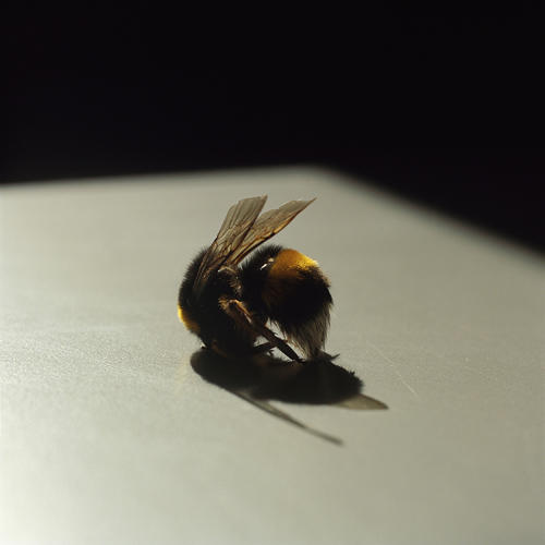 <p>The curled body of a dead bee, which might seem like no big deal if you spotted it on your windowsill, takes on a deep melancholy when seen through Goldblatt's lens, juxtaposed with her studies of aging human bodies.</p>