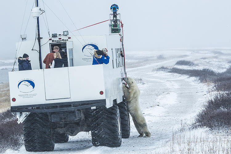 <p>Though you may never get to visit this piece of the Canadian tundra that's appropriately nicknamed the &quot;Polar Bear Capital of the World,&quot; not to worry.</p>