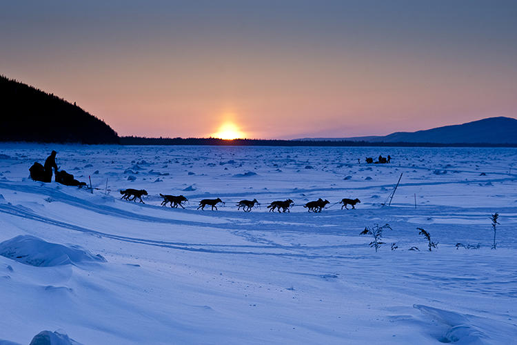 <p>The 2014 Iditarod Race kicked off this past Sunday.</p>