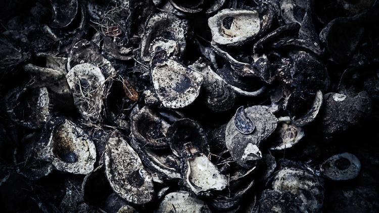 <p>&quot;Oyster shells are everywhere in New Orleans,&quot; Walsh said. &quot;Their odor mixed with turmeric helped create this spicy, death smell.&quot;</p>
