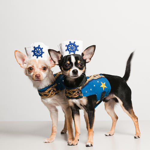 <p>Kimba and Bogie wear Bandit Rubio Designs by Anthony Rubio.</p>