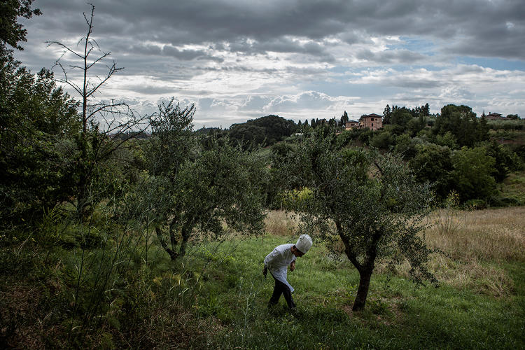 <p>Foraging, Il Canto, Siena, Italy</p>