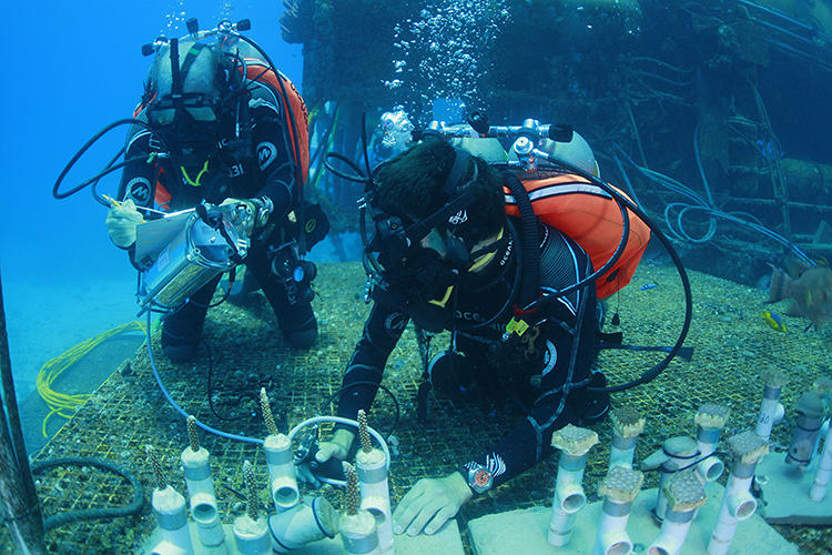 <p>On the 50th anniversary of ocean explorer Jacques Cousteau's 30-day undersea stint in a lab below the Red Sea, his grandson, aquanaut Fabien Cousteau, decided to honor his journey.</p>
