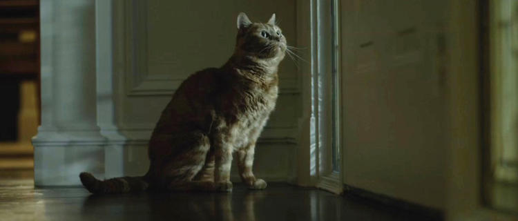 <p>Boris, the real star of <em>Gone Girl</em> (2014). Even <em>Vogue</em> noticed his acting chops.</p>