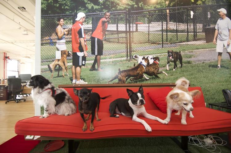 <p>A cat made the way for future pets at Meetup HQ. After an employee adopted the stray, dogs started joining their owners to work--including the occasional mastiff.</p>