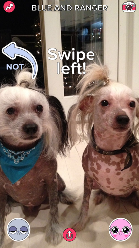 <p>BuzzFeed has released a new app titled &quot;Cute or Not.&quot; The brightly colored app is best described as Tinder for pets.</p>
