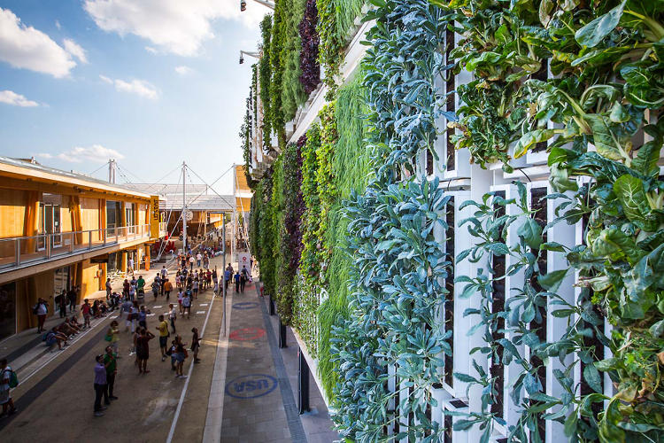 <p>One urban farming company thinks cities have another resource: walls.</p>