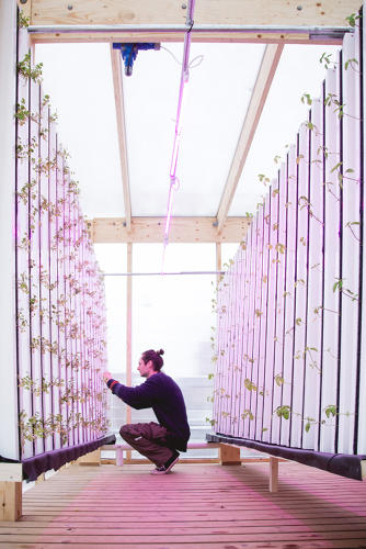 <p>Impact Farm is a ready-made agriculture kit that shows up in an old shipping container.</p>
