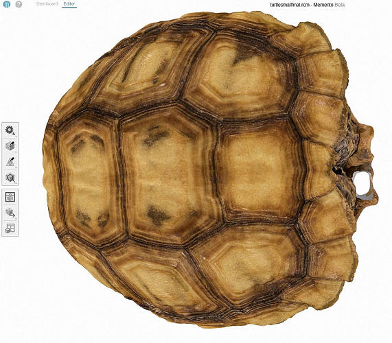 <p>Similar projects could help all kinds of tortoises around the world, which also fall prey to various members of the crow family.</p>