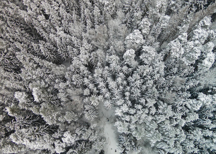<p><em>Frozen Greens</em> depicts a forest covered in snow on the side of Vilnius.</p>