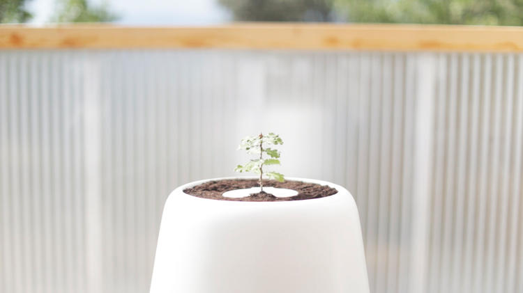 <p>With the Bios Urn, watch your dearly departed turn into a tree on your balcony.</p>