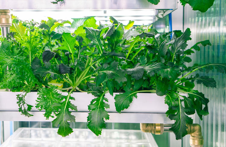 <p>Like other vertical farms, it has environmental advantages.</p>