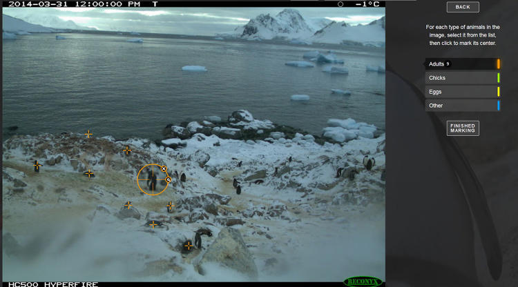 <p>Cameras can track penguins without disturbing them, unlike in-person researchers or GPS tracking devices attached to the birds.</p>