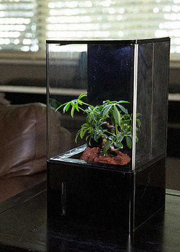 <p>Full-spectrum LED lights make it possible to grow plants far from a window.</p>