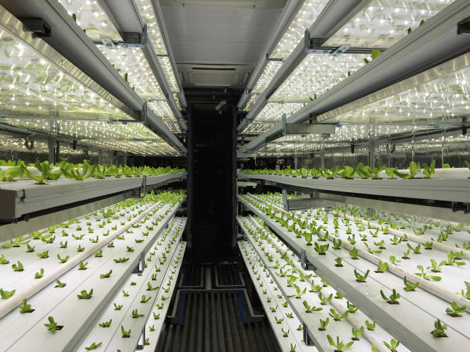 <p>Inside one 40-foot container, trays of butter lettuce glow brightly under LED lights. Another container grows baby greens.x</p>